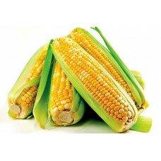 Насіння кукурудзи Syngenta Неріса ФАО 200